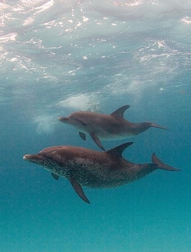 Top 10 Scuba Diving