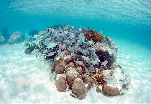 Caribbean Scuba Diving