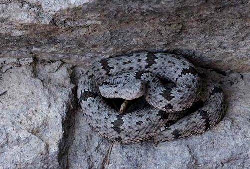Rattlesnake Rock Climbing 2