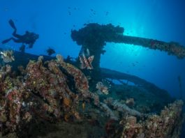 Scuba diver explores underwater wreckage of the Thistlegorm. Backlit stern artillery gun with many lionfish in the foreground. Red Sea, Egypt, November.