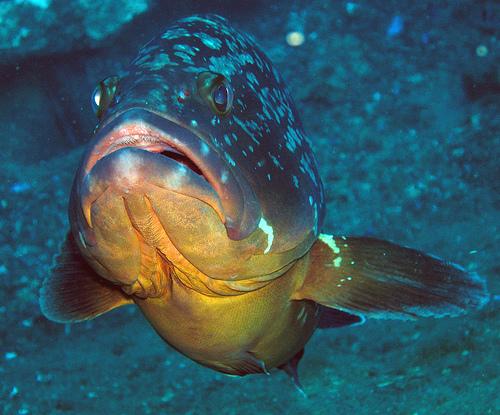 Scuba Diving Sites in Spain